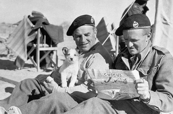 British soldiers dogs ww2