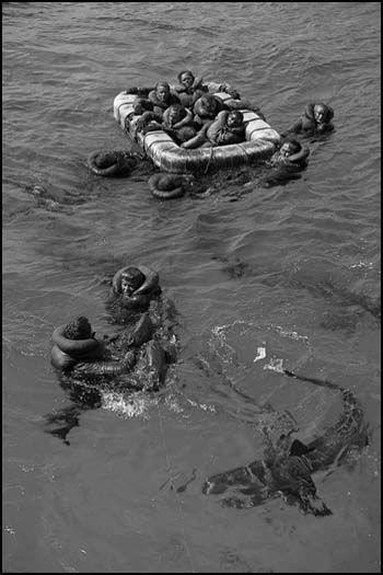 uss indianapolis survivors sharks