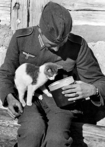 wehrmacht soldiers animals ww2